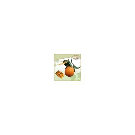 Arance dolci di Ribera - Qualità Vaniglia